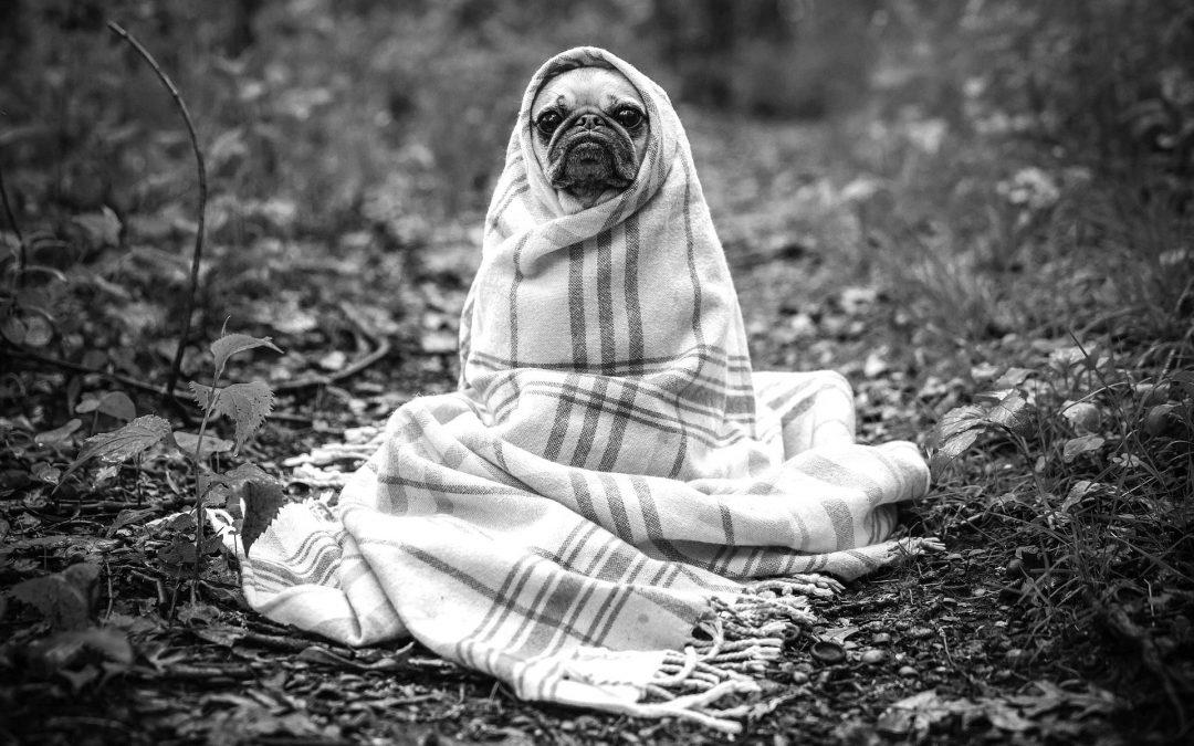Humanizar al perro