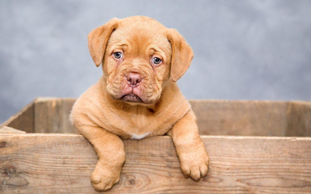Mi perro se mea por todos lados ¿Cómo puedo solucionarlo?