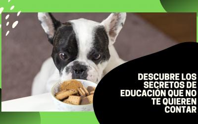 Educación canina Secretos de adiestradores / Trucos