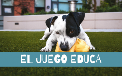 Los juegos para perros educan ¿Quieres saber por qué?