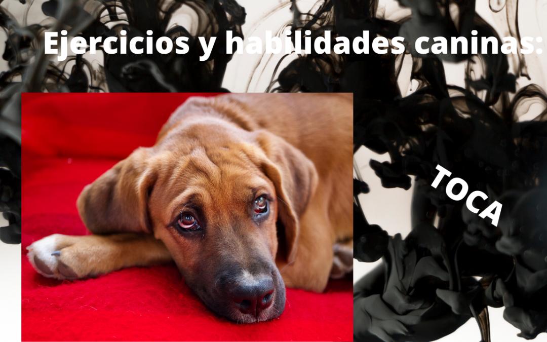 Ejercicios y habilidades caninas: Toca