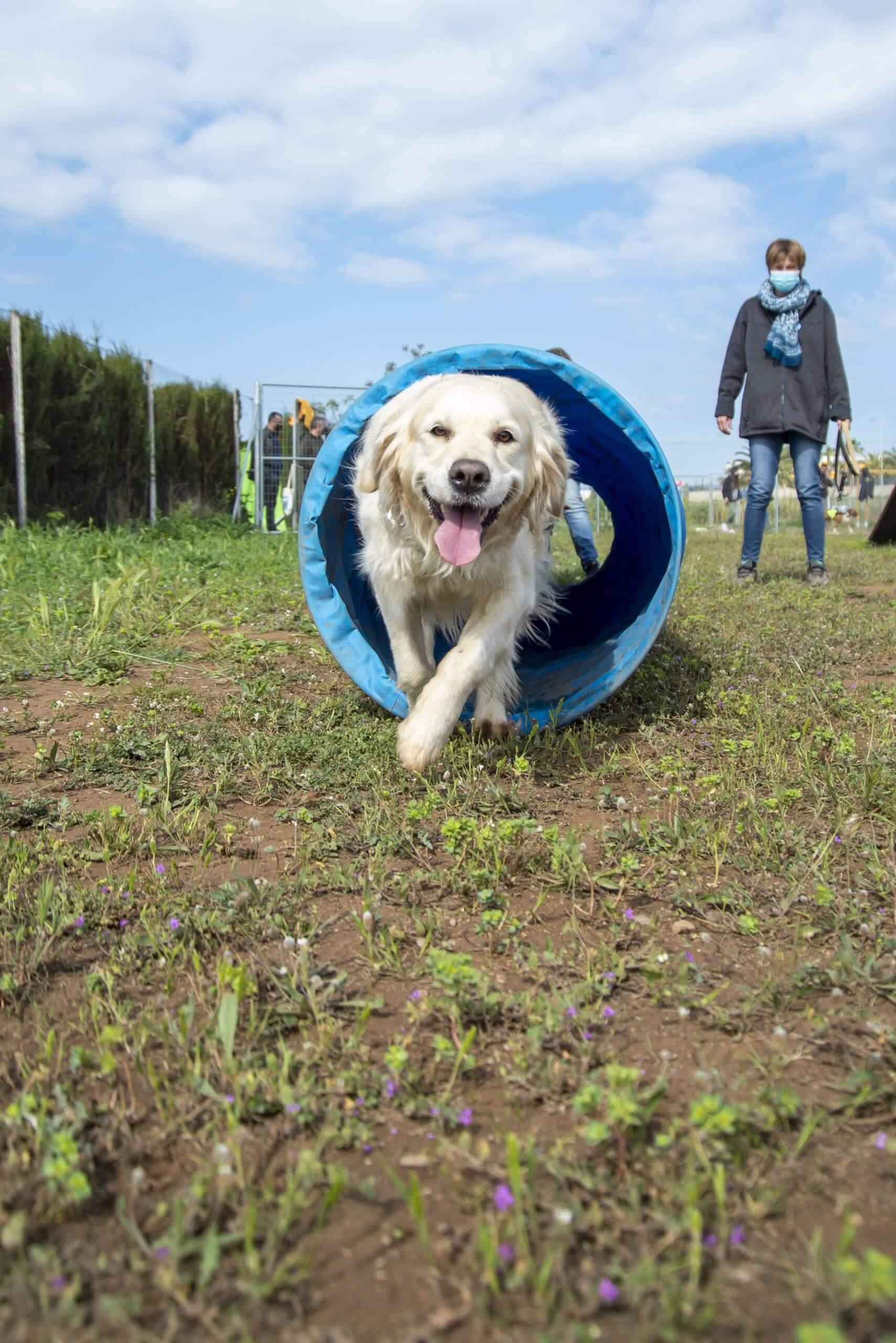parque canino valencia