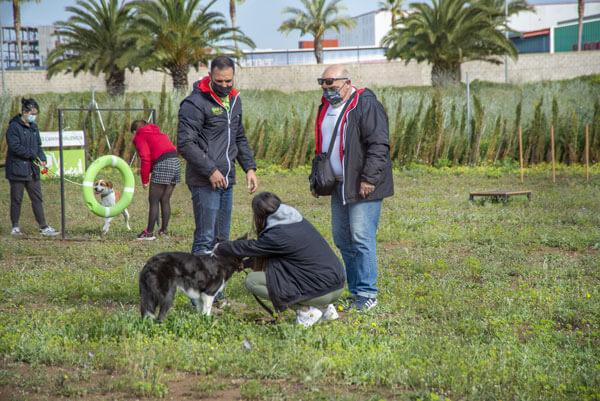 adiestramiento canino formacion