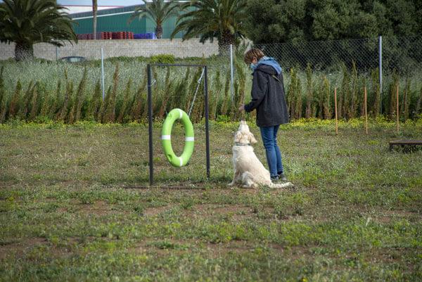 formacion canina valencia