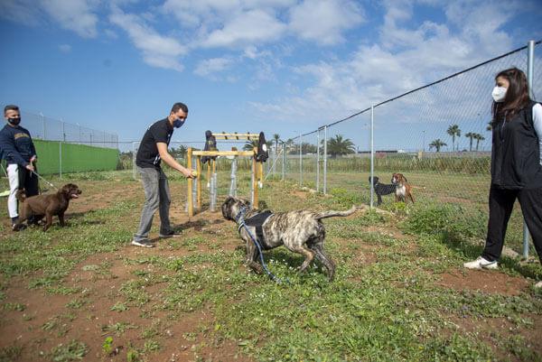 adiestramiento canino en valencia